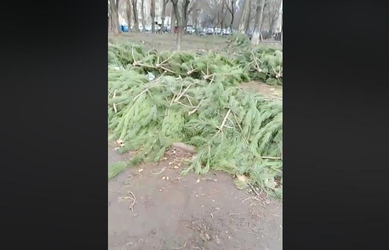 Одесситы возмущены «кладбищем» из нераспроданных елок — видео/фото