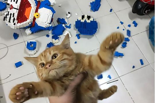 Кот и разбитая фигурка