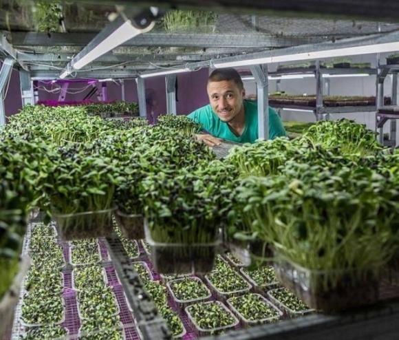 Бизнес на траве. Как одессит стал гуру урбан-фермерства и учит этому всех желающих фото, иллюстрация