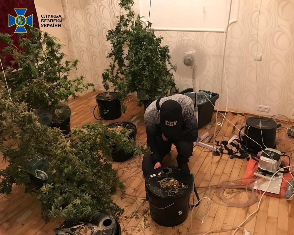 У Дніпрі СБУ знайшла у контрабандистів наркотиків ще й наркооранжерею.