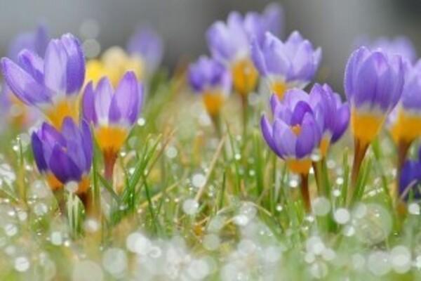 Синоптикиня дала прогноз погоди на весну в Україні